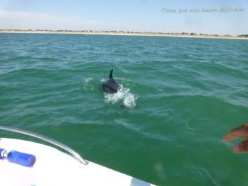 Pesca de caballas con delfines en Doñana _ Guadalquivir _ (