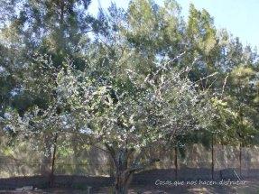 #primavera #disfrutar #belleza #campo #sonidos #olor #naturaleza #vida (8)