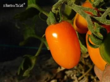 Cherry Uva Naranja (2)