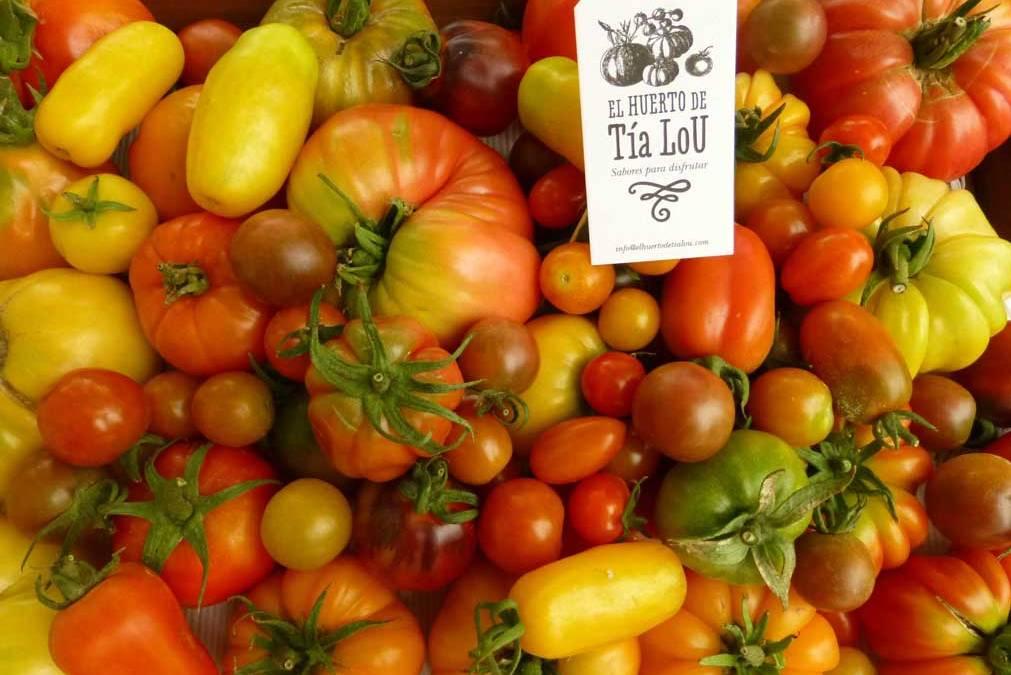 Finalizada la campaña de tomates con sabor