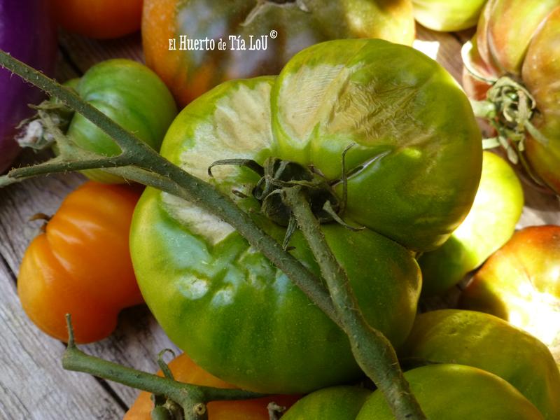 Ola de calor y tomates: Una mala combinación.