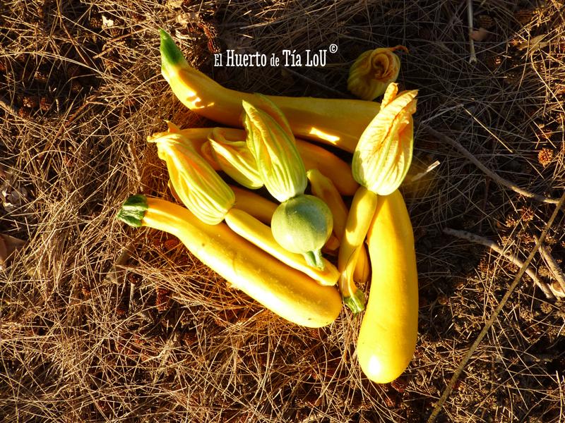 Calabacines para llevarte al huerto