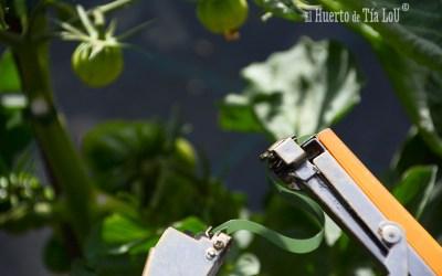 La mejor forma de atar tomates