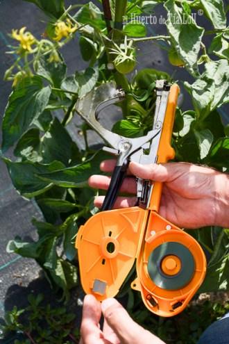La mejor forma de atar tomates _El Huerto de Tia lou y Rubangel (1)
