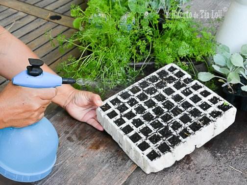 como-regar-los-semilleros-el-mejor-metodo_matabi_berry-1