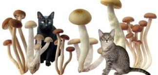 tumore nel gatto e terapie naturali