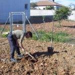Isaiah 55 Tree Planting