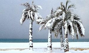 Janvier 1985 - Palmiers Promenade des Anglais