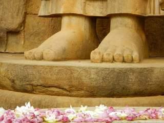 Fiori di loto davanti alla statua di Aukana Buddha, Sri Lanka