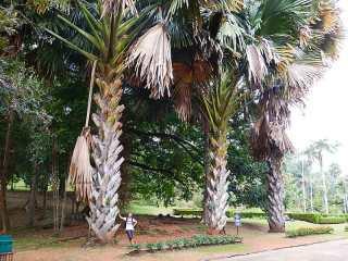 Sri Lanka Giardino botanico di Kandy
