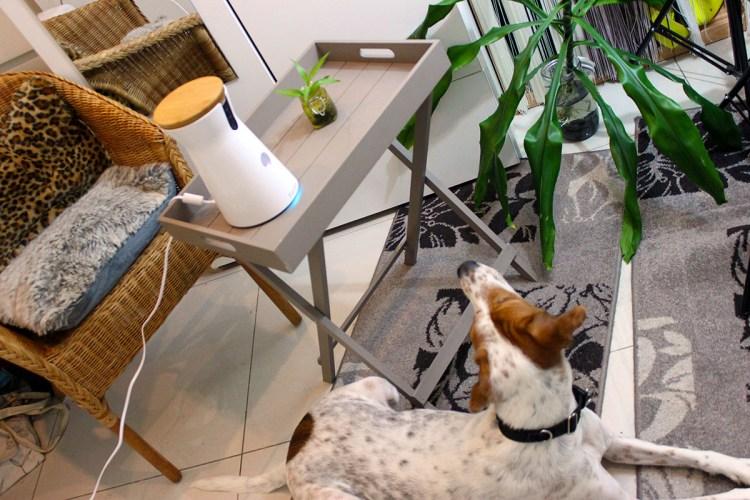 Furbo dog caméra -ou-la- dog sitter -de-votre-chien-concours-elise-and-co