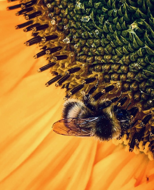 Bees & Dream Sequencing!