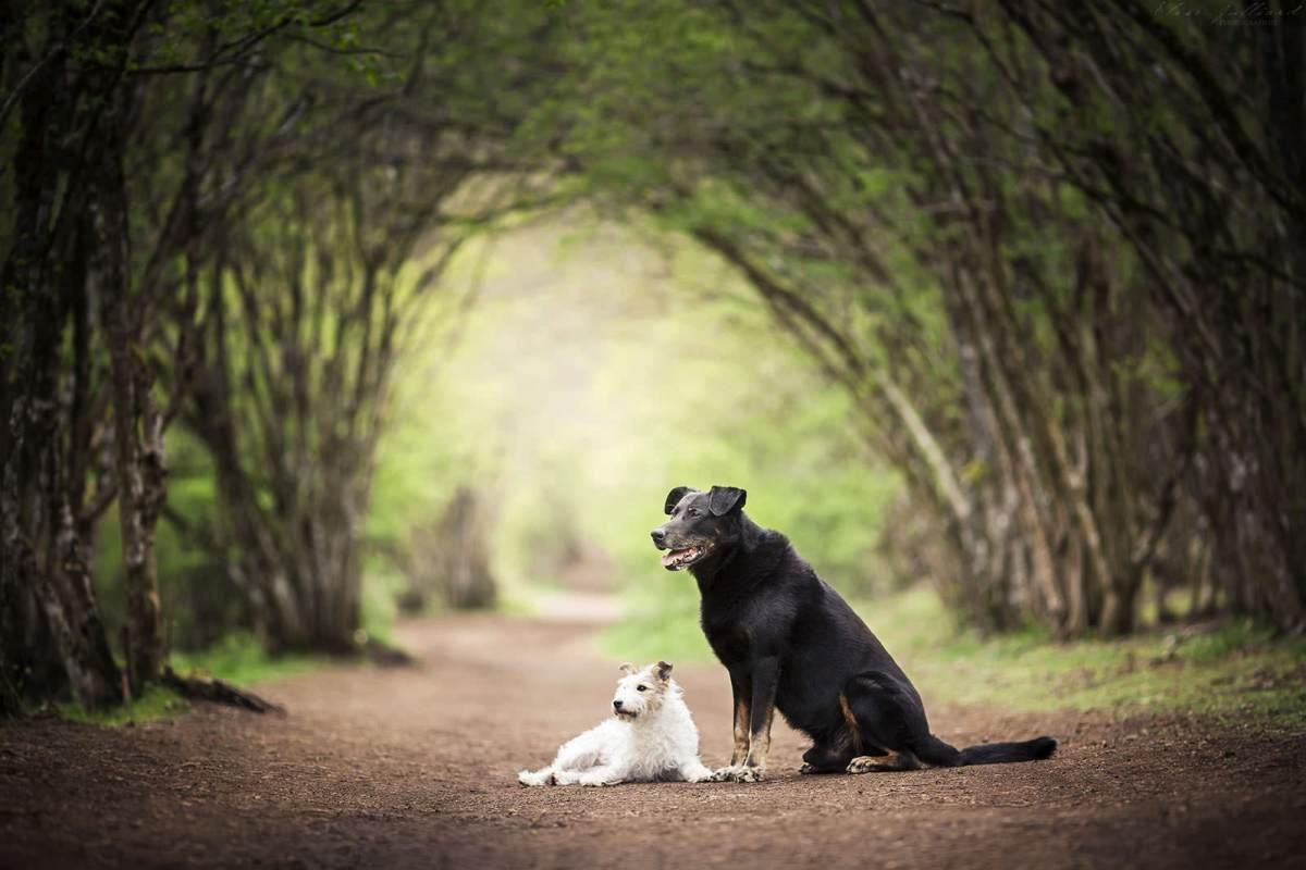 séance photo chien clermont ferrand