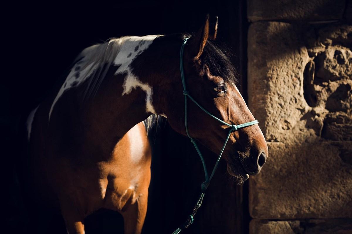 séance photo cheval Lyon