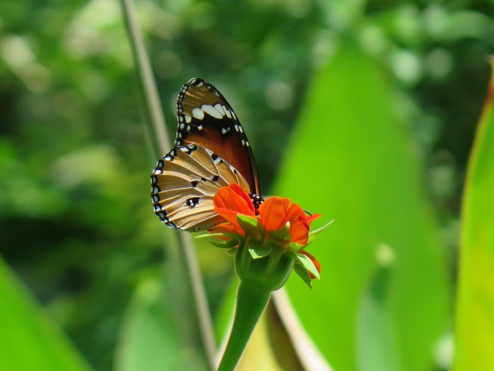 Ferme papillons Kampot Kep Cambodge blog voyage 24