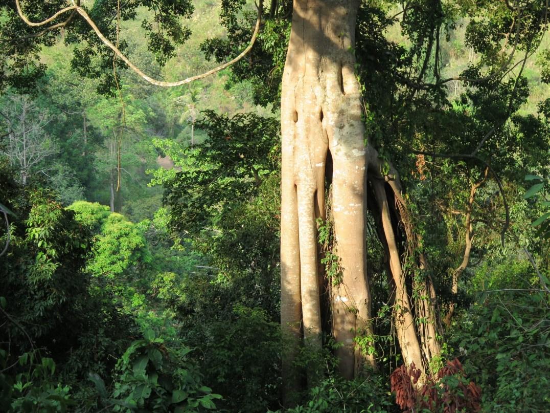 Parc national de Kep Kampot Kep Cambodge blog voyage 28