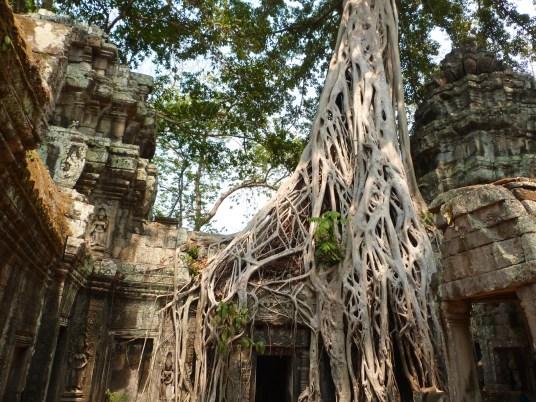Ta Prohm angkor cambodge blog voyage 37