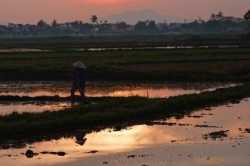Travail rizières Hoi An Bilan Vietnam blog voyage 2016 20