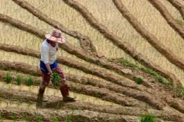 Travail rizières Trek Sapa Vietnam blog voyage 2016 42