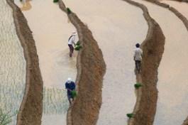 Travail rizières Trek Sapa Vietnam blog voyage 2016 44