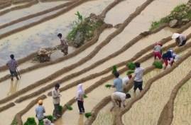 Travail rizieres Trek Sapa Vietnam blog voyage 2016 45