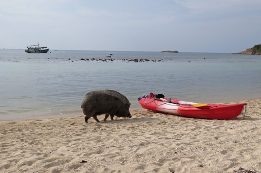 Cochon plage Koh Phangan Thailande blog voyage 2016 17