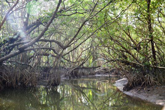 Mangrove Cherating Malaisie blog voyage 2016 19