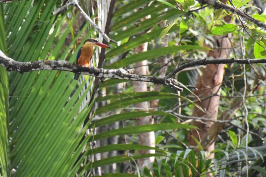 Mangrove Cherating Malaisie blog voyage 2016 23