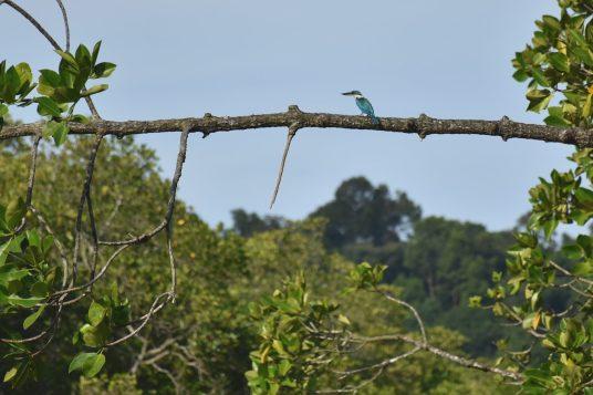 """""""Kingfisher ! Kingfisher !!!"""""""