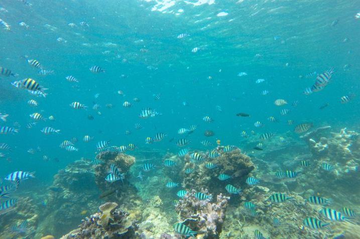 Genting Bay Palau Tioman Malaisie blog voyage 2016 25