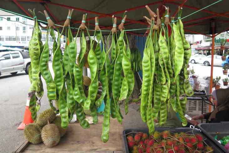 Haricots Tanah Rata Cameron Highlands Malaisie blog voyage 2016 24