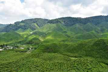 Bharat Tea Plantation Tanah Rata Cameron Highlands Malaisie blog voyage 2016 27
