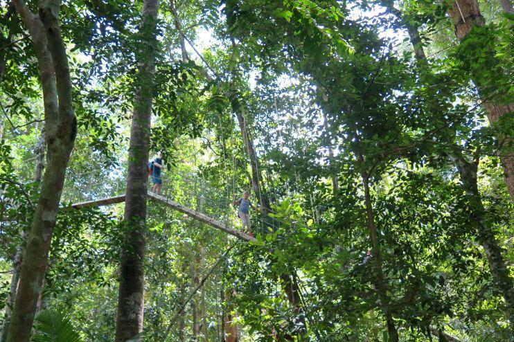 Canopee walkway Trek Taman Negara Malaisie blog voyage 2016 45