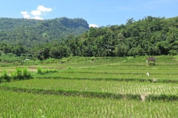 Rizières senggigi-lombok-indonesie-blog-voyage-2016-28