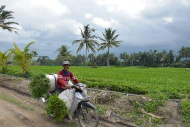 Rizières ubud-indonesie-blog-voyage-2016-32