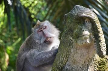 Singe mime ubud-indonesie-blog-voyage-2016-54