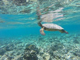 Snorkeling gili-air-gili-meno-lombok-indonesie-blog-voyage-2016
