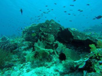 Éponges, ophiures, coraux - Tatawa Besar #5