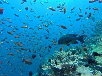 Nuages de poissons - Batu Bolong #2