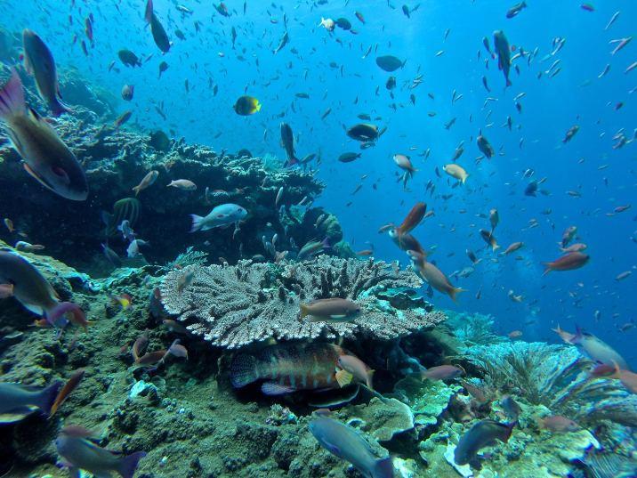 Coraux et poissons - Batu Bolong #9