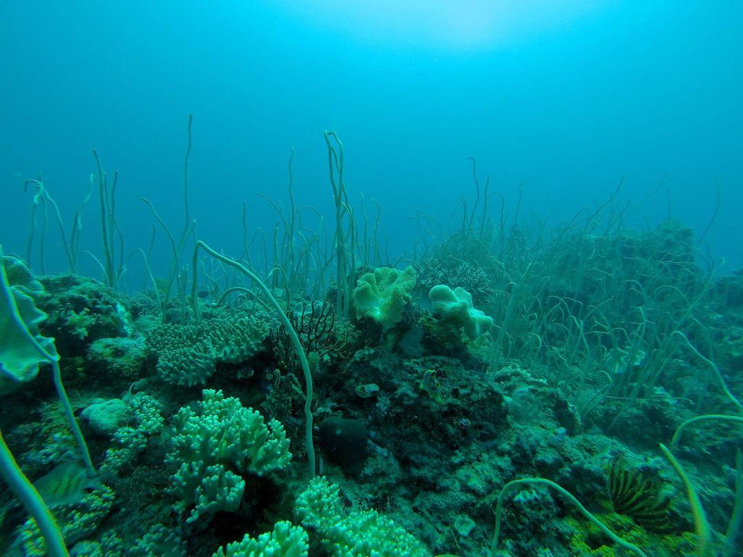 Jardin sous-marin - Tebolon #4