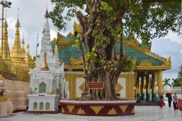 Templions Shwedagon Yangon-Myanmar-Birmanie-blog-voyage-2016 43