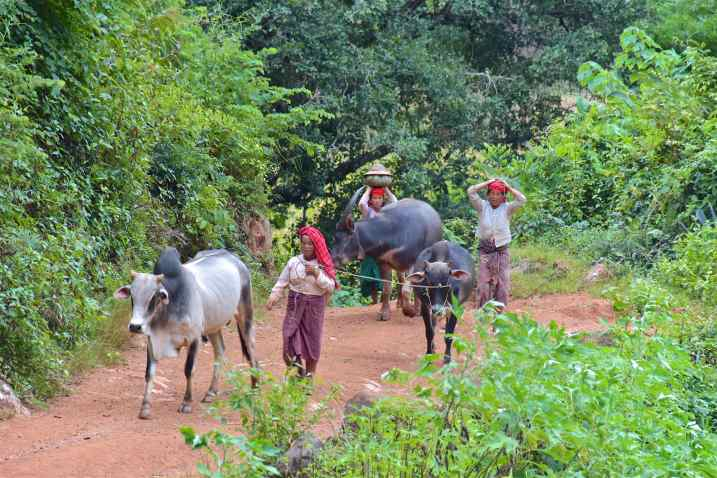 Femmes retour Trek-Kalaw-Inle-Myanmar-blog-voyage-2016 55