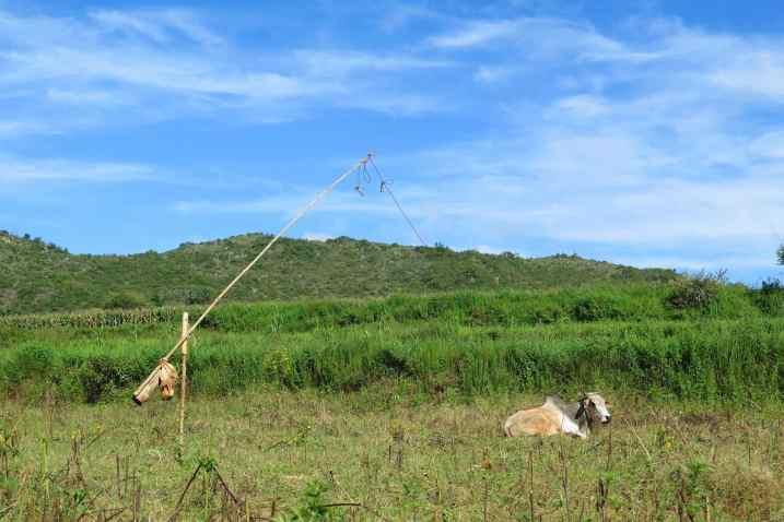 Vache Trek-Kalaw-Inle-Myanmar-blog-voyage-2016 65
