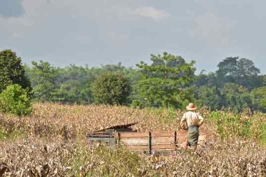 Agriculteur Pyin-Oo-Lwin-Gohteik-Myanmar-blog-voyage-2016 28