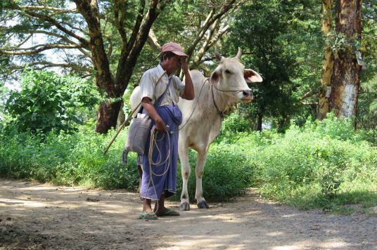 Panne Mandalay-Inwa-Ubein-Myanmar-Birmanie-blog-voyage-2016 2