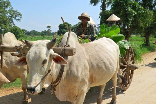 Charrette Mandalay-Inwa-Ubein-Myanmar-Birmanie-blog-voyage-2016 42