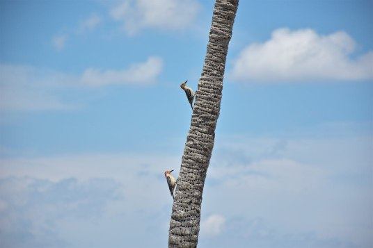 Pics Everglades Un an Floride blog voyage 2019 6
