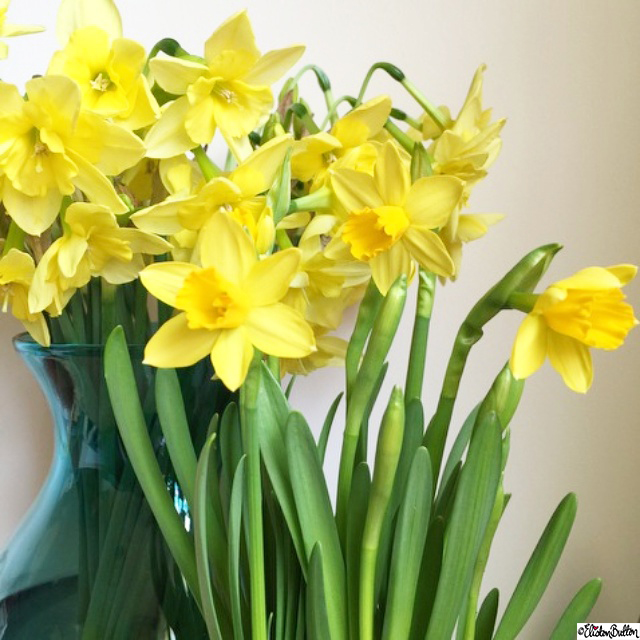 Springtime Daffodils - Around Here...April 2015 at www.elistonbutton.com - Eliston Button - That Crafty Kid – Art, Design, Craft & Adventure.