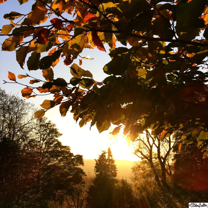 Golden Sunset Through the Autumn Leaves at Dovers Hill, Cotswolds - Around Here…October 2015 at www.elistonbutton.com - Eliston Button - That Crafty Kid